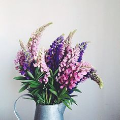 lovely lupins...