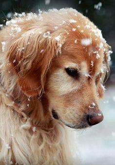 snow pup!