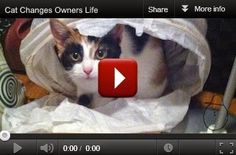 REAL LIFE: Click to see how this cat changes her owner's life!