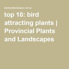 top 10: bird attracting plants | Provincial Plants and Landscapes