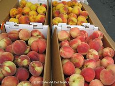 Peaches ~ Yellow (top) and white (bottom) are now ripe at the Farmers' Market. Photo © 2013 Ann M. Del Tredici