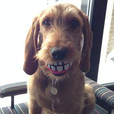 ny bold med tænder ... Ha ha