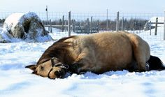 This is horse who can't contain his love of snow.....18 Horses You Can't Believe Are Even Real