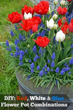 DIY: Red, White and Blue Flowerpot Combinations #Gardening. No red, more white