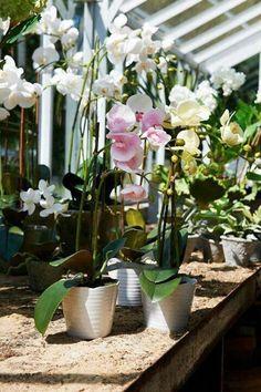 Las orquídeas son unas de plantas más preciosas que existen y como tal tienen jardineros fanáticos de ellas en todo el globo. Son ideales para tener en casa y además de belleza nos alegran con su c…