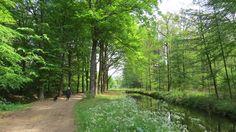 2017-05-21 Mooi beekje nabij het natuurkampeerterrein in Vilsteren