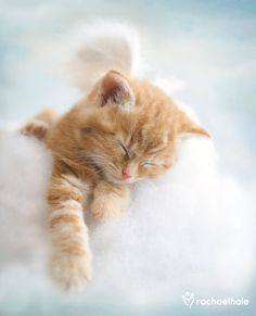 Monty (Ginger Moggy Kitten) - Monty is a little angel, always drifting off with his head in the clouds.
