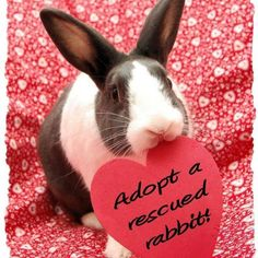 February is Adopt a Rescued Rabbit Month. Perhaps one of these 5 adorable and adoptable rabbits will find their way into your home? Bunny Rescue, Rescue Rabbit, Pet Rabbit, Baby Bunnies, Cute Bunny, Bunny Pics, Big Bunny, Bunny Rabbits, Benny And Joon