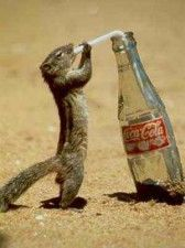 Let's have COCA-COLA! i mean who dose not love cok-a-cola? Funny Squirrel Pictures, Funny Animal Photos, Funny Animal Pictures, Funny Photos, Cute Pictures, Funny Animals, Cute Animals, Animal Jokes, Funniest Photos