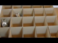 Cute Baby Kittens Find Endless Joy In Playing With Cardboard Box Maze - 9GAG.tv