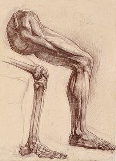 Anatomical analysis of the feet. sangina. 75x55 5.2002g