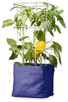 Growing Vegetables in Pots and Planters - helpful tips from Gardner's Supply Company