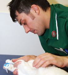 I want to be a veterinary nurse - Animal Owners