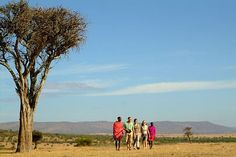 Kenya for Connoisseurs 11 Day* Fly-in Eco Safari from US$5940