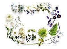 Natureza by Mary Jo Hoffman | Casa-Atelier Blog & Shop