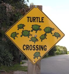 Turtle Crossing. Need to make something like this!