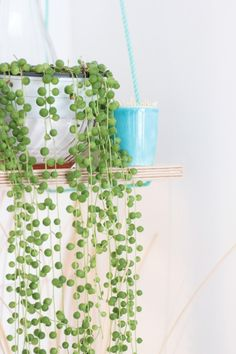 It-Plants Plantes Vertes Originales String of Pearls // Hëllø Blogzine blog deco & lifestyle www.hello-hello.fr #stringofpearls #seneciorowleyanus