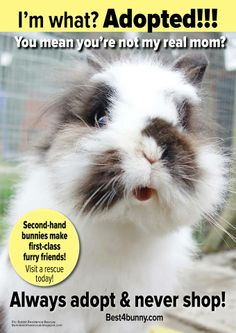I'm what? Adopted!!!! Adopting rescue bunnies is always best. Here's the reasons why...