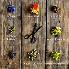 An edible flowers guide! Here is the climate-Cool way to add color to food & drinks, complete with flavor profiles and recipe ideas, how beautiful!