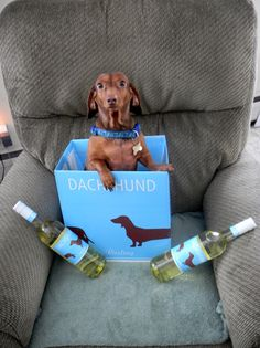 Tootsie and Dachshund Riesling