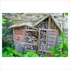 Insect hotel - or Cafe for lizards....  either way it would be fun to watch