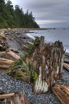 East shore by Feet wet, British Columbia