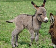 106-bebes-animaux-hyper-craquants-qui-vous-feront-fondre-de-tendresse81