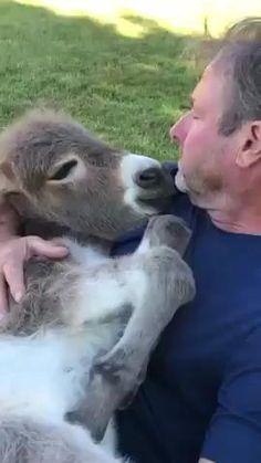 Super Cute Animals, Cute Little Animals, Cute Funny Animals, Cute Animal Videos, Funny Animal Pictures, Happy Animals, Animals And Pets, Cool Pets, Cute Dogs