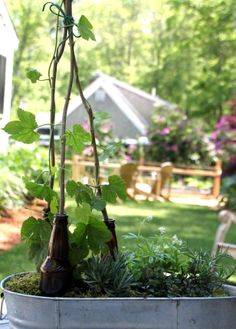 So fun!  Will have to try it with Summer Shandy hop plant!  Plant a Beer Garden : HGTV Gardens