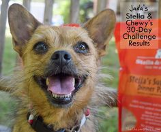 Jada's Stella & Chewy's 30-Day Challenge Results #Sponsored Dog Food Reviews, 30 Day Challenge, Jada, Corgi, Challenges, Animals, Corgis, Animales, Challenge 30 Days