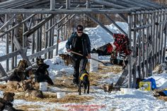 Jeff King scoops poop while his dogs rest during his 24-hour layover at Ruby during Iditarod 2016. Alaska. Photo by Jeff Schultz