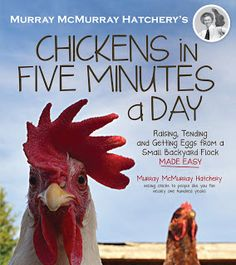 My review of Chickens in Five Minutes a Day; a must have for new and experienced chicken keepers alike.