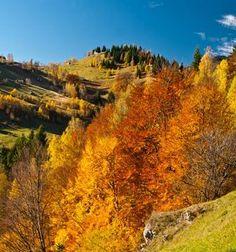 Autumn in Krkonoše (North-East Bohemia), Czechia