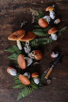 """syflove: """" mushrooms """""""