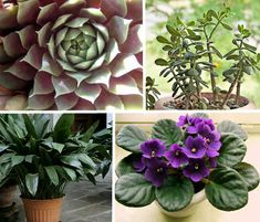 Easy to take care of house plants