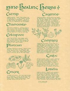 The 9 Healing Herbs Poster includes Scientific names and uses for the healing herbs.