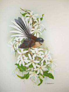 New Zealand fantail on clematis by janet marshall on ARTwanted New Zealand Tattoo, New Zealand Art, Decoupage, Nz Art, Maori Art, Kiwiana, Plant Drawing, Animal Sketches, Bird Pictures