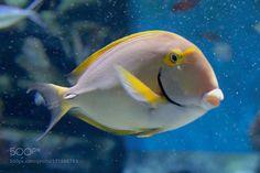 Untitled by 2252889315 #nature #photooftheday #amazing #picoftheday #sea #underwater
