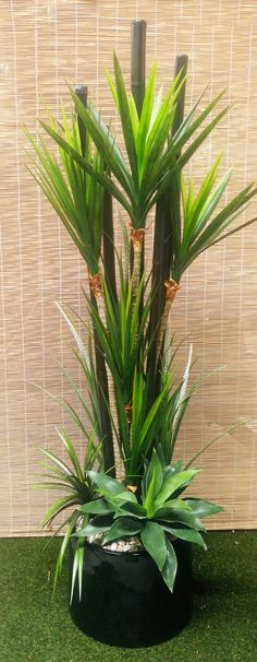 Packages- Yucca + Bamboo-Poles Combination Planter