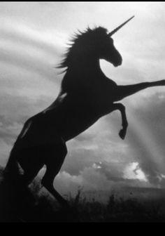 6bc334ac0e9 I love unicorns Unicorn Art