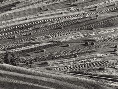 Martin Martinček: Žatevný koberec II.:1963 - 1966