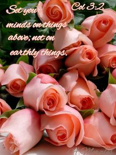 <3 <3 Colossians 3:2 New International Version (NIV)  2 Set your minds on things above, not on earthly things.