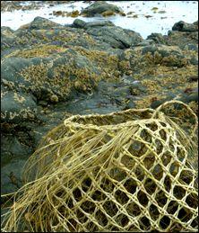 NZ flax weaving blog » Blog Archive » Making an open-weave basket Rope Basket, Basket Weaving, Woven Baskets, New Zealand Flax, Mummy Crafts, Flax Weaving, Flax Flowers, Straw Art, Finger Weaving