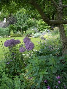 Pretty Garden border sun and shade- Glenna Partridge Garden Design