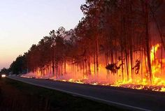 Air Quality Suffers After Forest Fires  - http://www.environment.co.za/pollution/air-quality-suffers-after-forest-fires.html