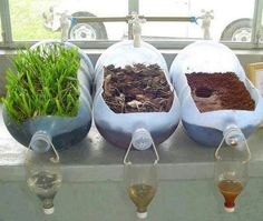 Groundwater science experiment shows importance of trees and other plants! Inspired by Earth Day, great for a HS Environmental Science class. Kid Science, Preschool Science, Middle School Science, Science Classroom, Science Lessons, Teaching Science, Science Ideas, Science Education, Plant Science Fair Projects