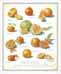 Oranges and Tangerines - John Burgoyne Studio