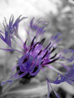 Purple on Gray