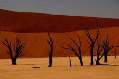 Image credit:  Travis Lupick . Images of dead trees in Naukluft Park, Namibia http://reversehomesickness.com/africa/dead-vlei-sossusvlei-namibia/