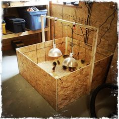 Backyard Poultry magazine: Once you've selected your chicken breeds and figured out where to buy baby chicks, you need some chick brooder ideas. Backyard Poultry, Backyard Chicken Coops, Backyard Farming, Chickens Backyard, Backyard Ideas, Best Egg Laying Chickens, Baby Chickens, Raising Chickens, Chicken Coop Run